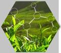 Phytochemicals-&-Botanical